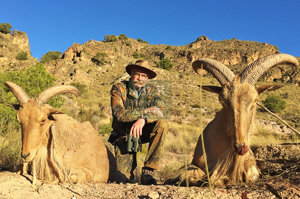 Spanish Aoudad Sheep Hunting in Spain