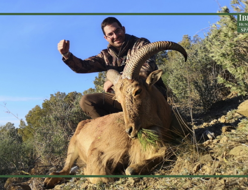 Hunting Aoudad Sheep after a driven hunt weekend