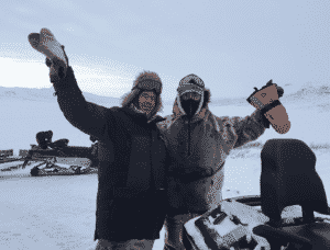 Muskox hunt in Greenland with Iberhunting worldwide