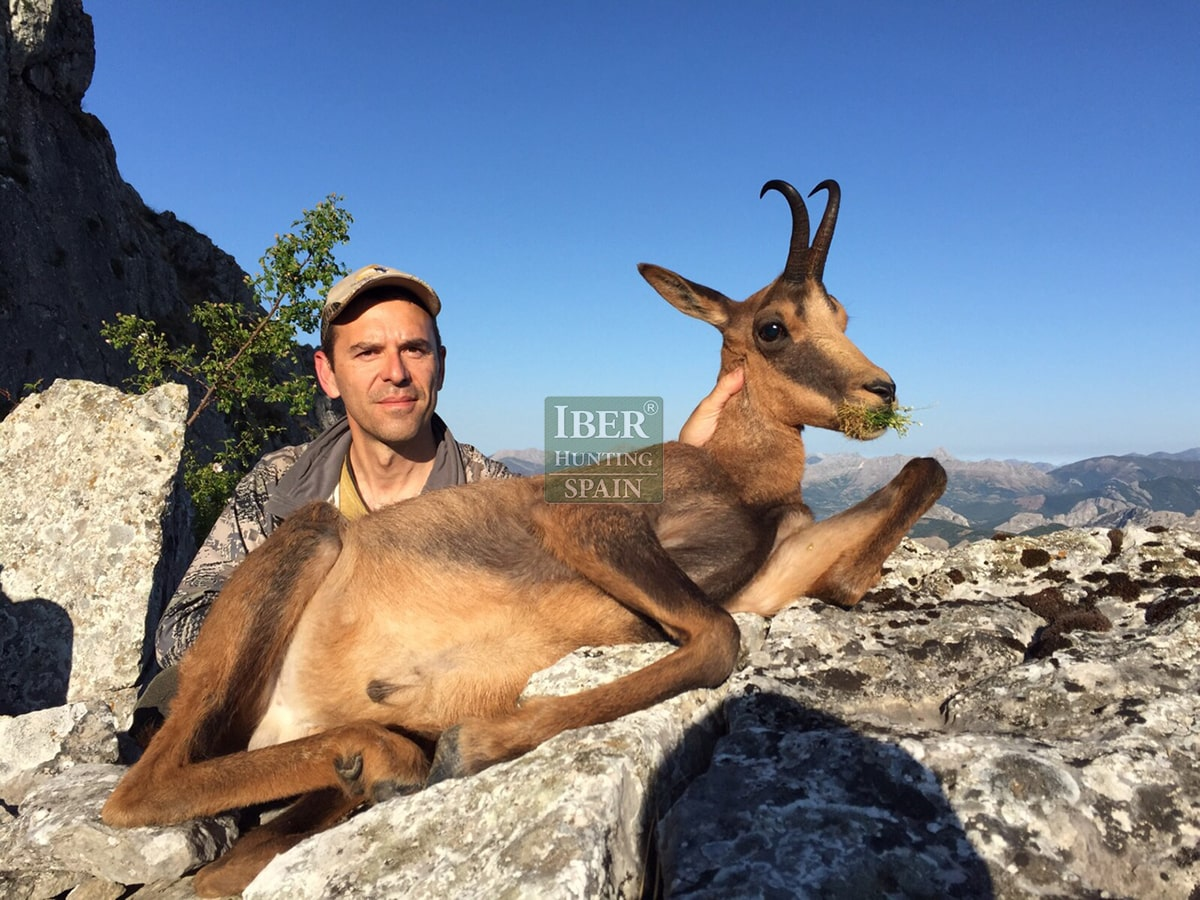 hunting cantabrian chamois iberhunting (16)