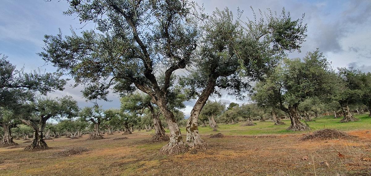 Gredos ibex hunt landscape-Iberhunting (1)
