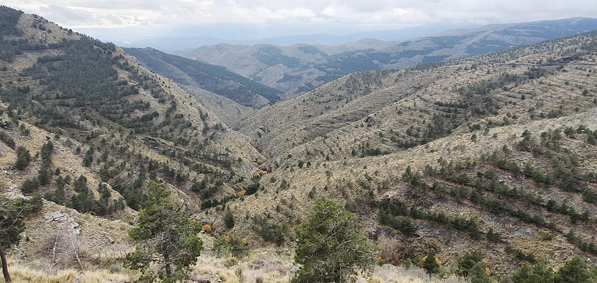 Sierra Nevada hunt with Iberhunting Spain-landscape