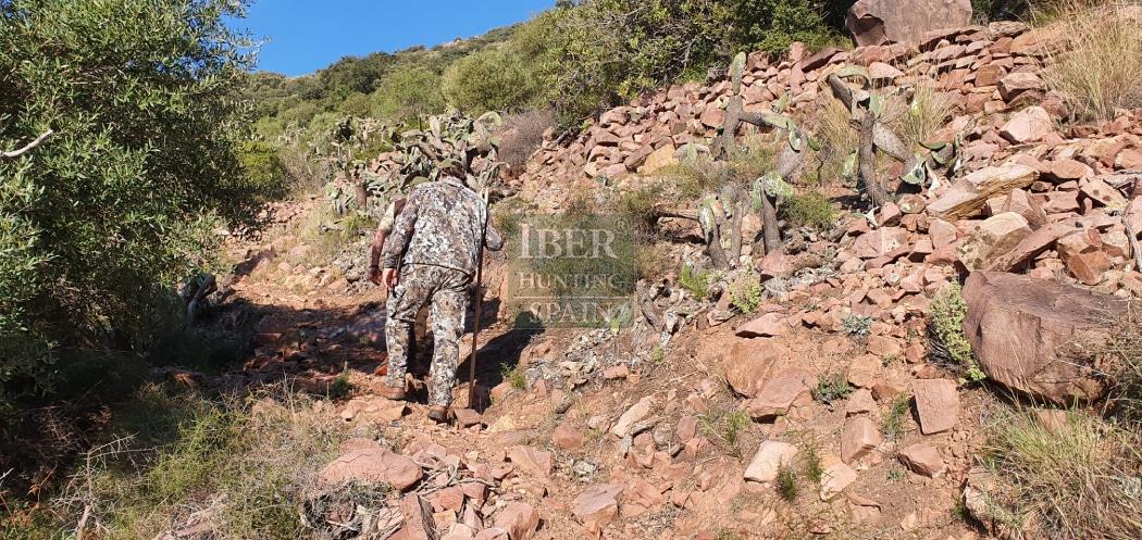 Hunt in Spain Beceite Ibex-Iberhunting Spain (5)