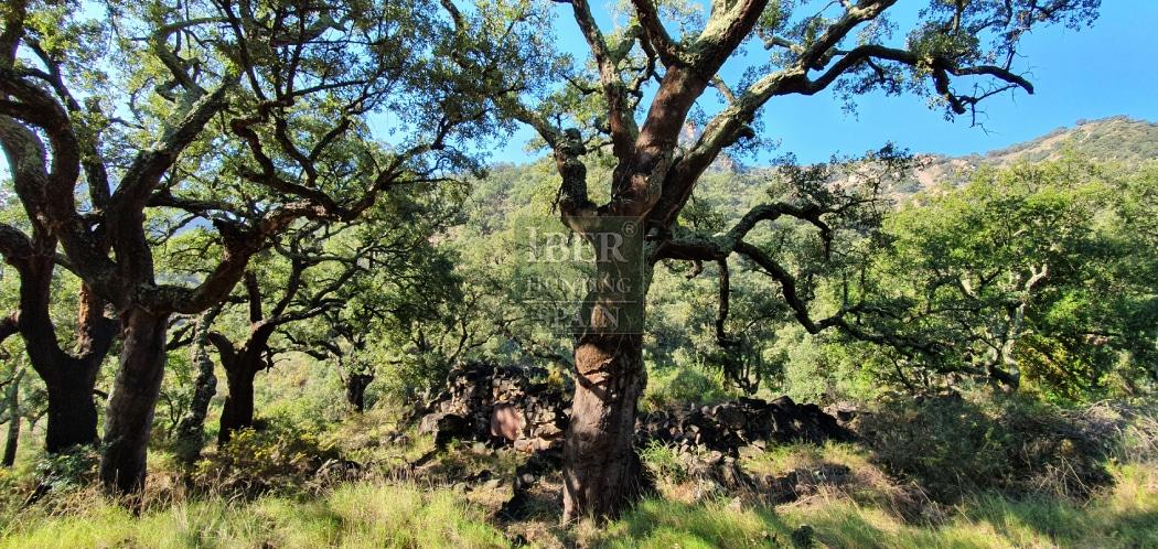 Hunt in Spain Beceite Ibex-Iberhunting Spain (6)