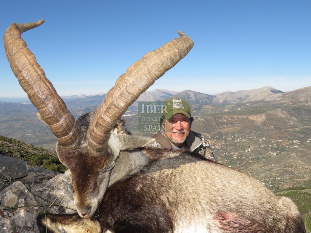 Hunt in Spain Ronda Ibex-Iberhunting Spain (4)