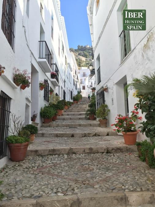 Tourism Ronda Ibex-Andalusian White Towns-Iberhunting Spain (5)