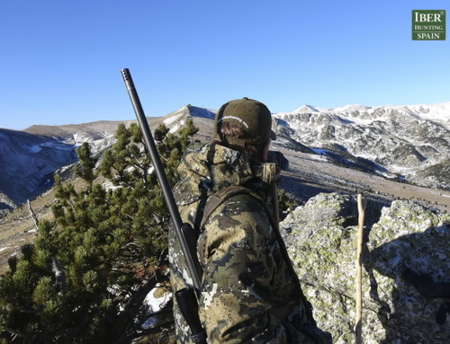 Why this may be the best time to book your hunting trip with Iberhunting