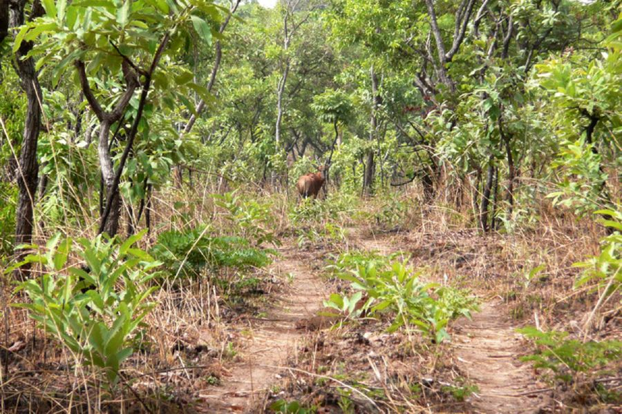 Hunting in Cameroon - Hunt in Cameroon