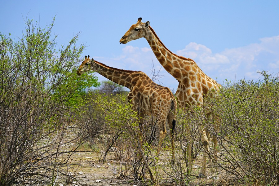 Animals in their habitat in Namibia