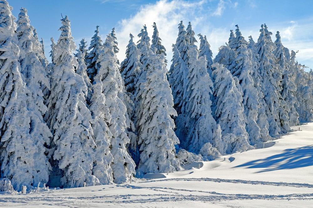 Hunt in Yakutia - Landscape of Yakutia in winter