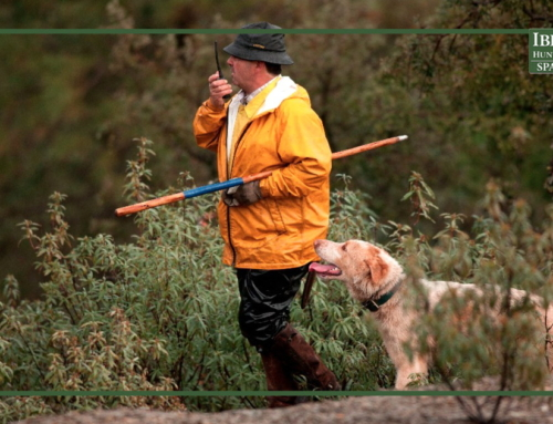 The Monteria: the most traditional hunt in Spain