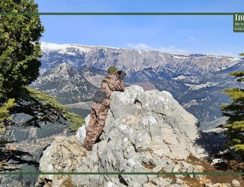 Hunting in Turkey the bezoar ibex for true mountain hunters