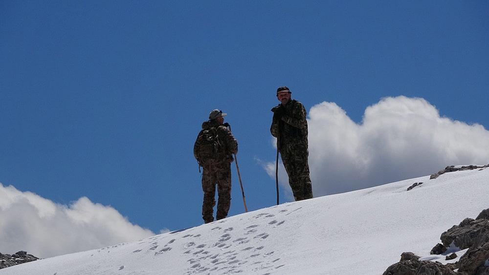 Looking for Bezoar ibex for hunting in Turkey