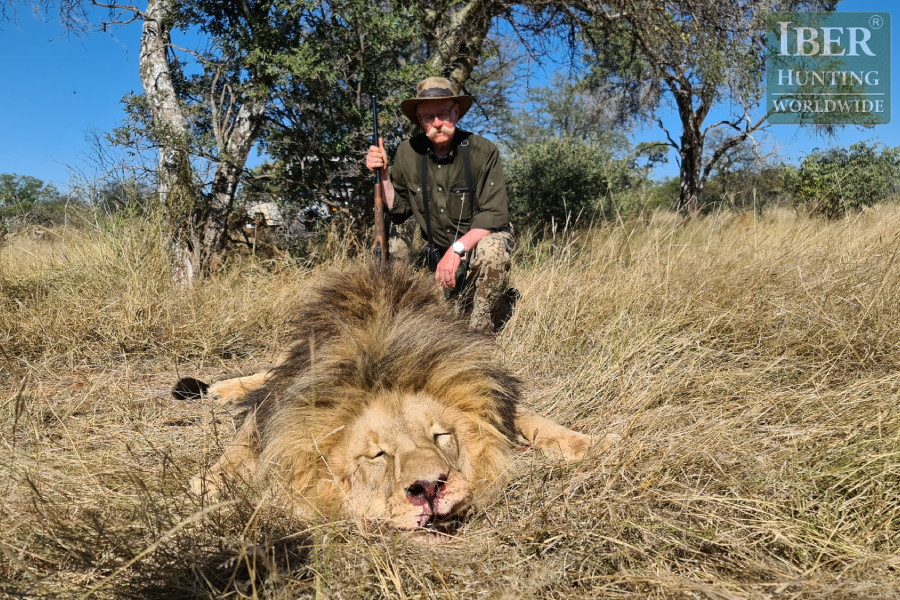 Last hunt of lion in South Africa