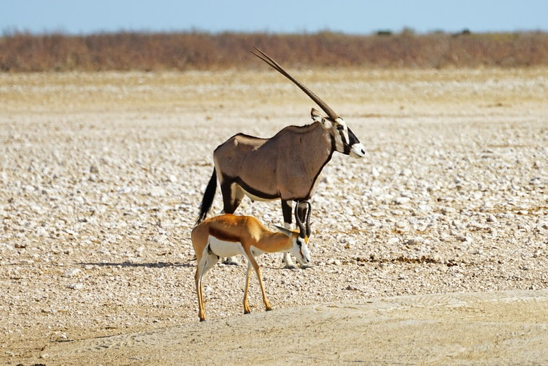 Animals in Namibia