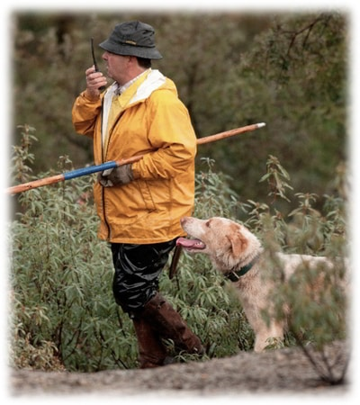Spanish monteria driven hunt information program