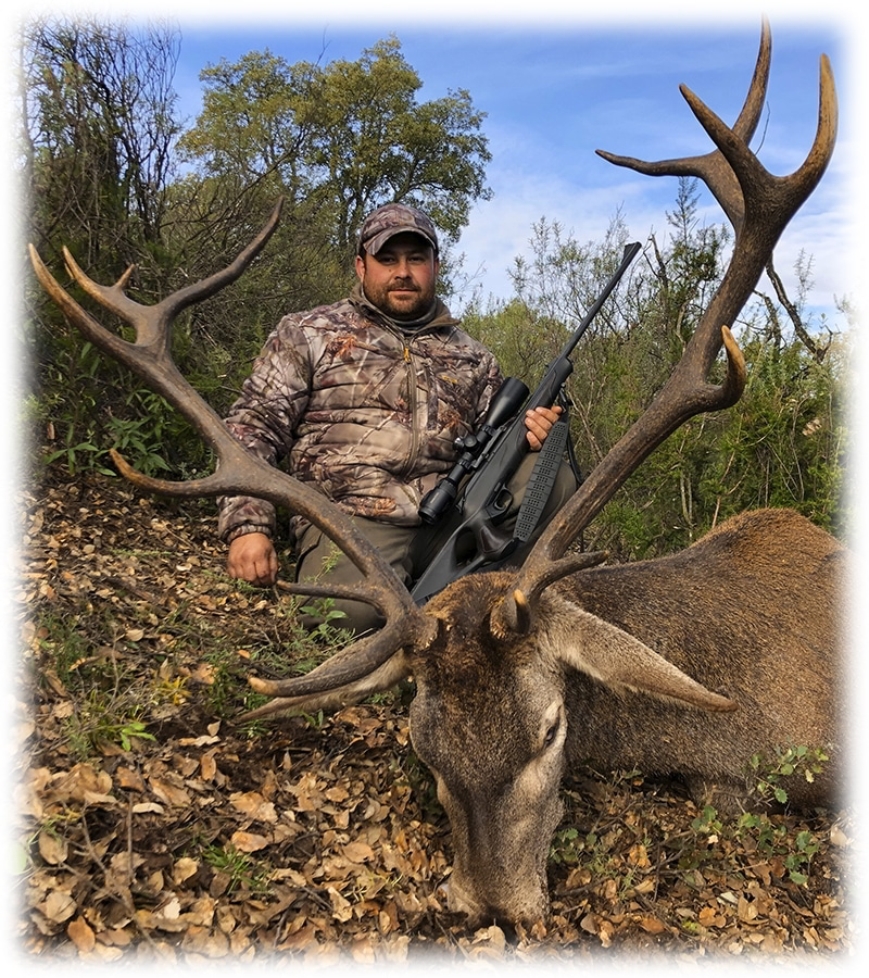 Red deer hunt in Spain