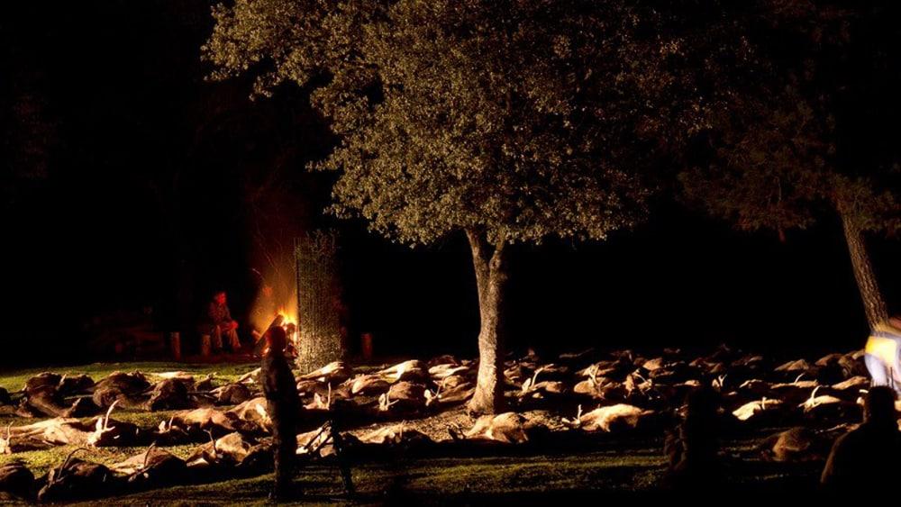 "the""junta"" of the animals in the driven hunt monteria"