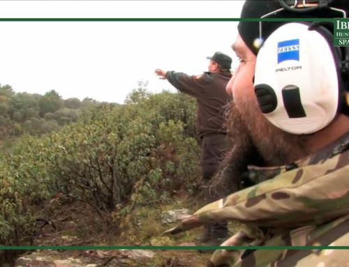 Driven Hunt in Spain: the history and roles of the Monteria